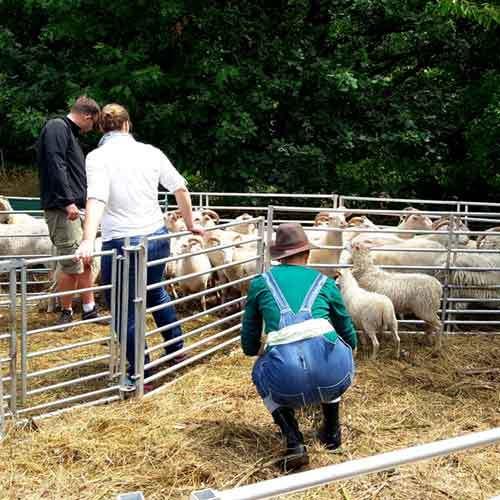 Weihnachtsfeier Ahrensburg.Schafe Hüten
